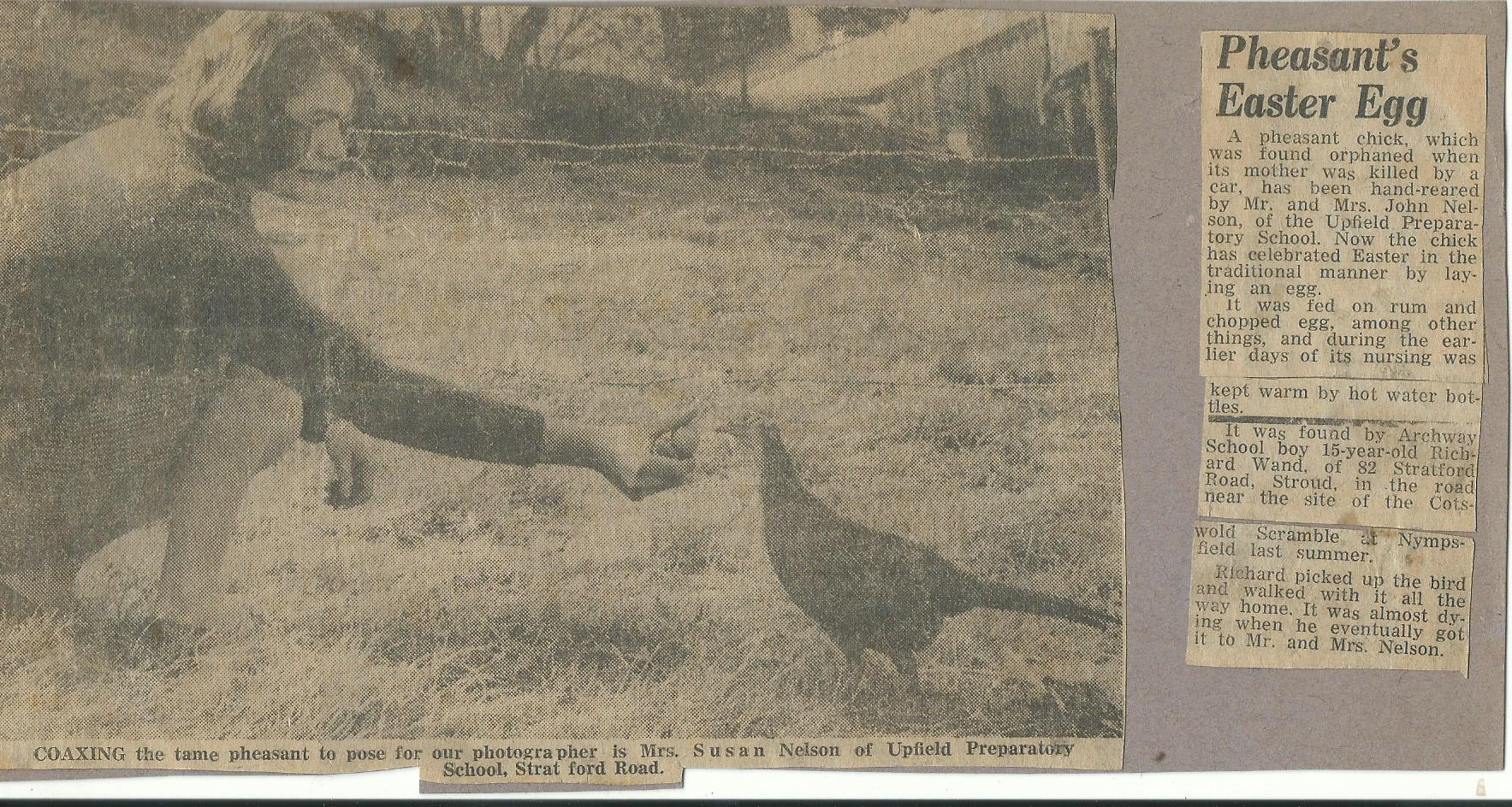 Sue and the Pheasant